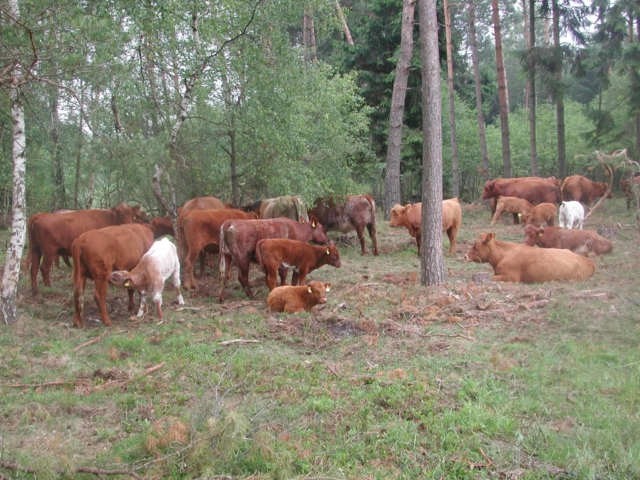 Wilseder Rote in the Radenbachtal   VNP Stiftung