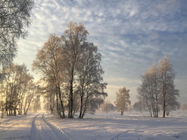 Winterlandschaft mit Schnee | Foto: VNP Stiftung Naturschutzpark Lüneburger Heide