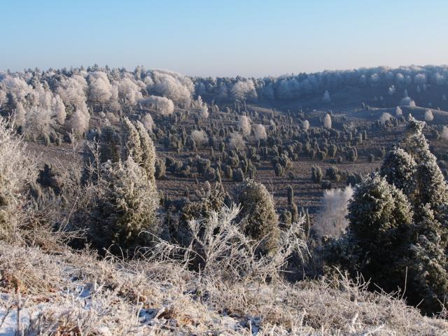 Winterliche Heidelandschaft mit Raureif | Foto: VNP Stiftung Naturschutzpark Lüneburger Heide